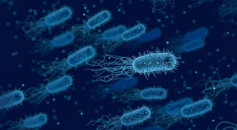funkce bakterií ve střevech